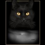 4diplom_lis_the_cat